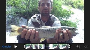Brown Trout — Richard Deslandes