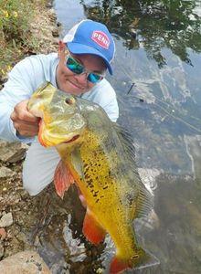 Peacock Bass ( Monoculus) — jimmy Maistrello