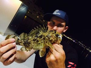 Brown Scorpionfish — Tony Fish