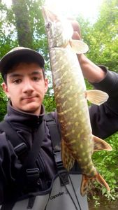 Northern Pike — Corentin Chatellier