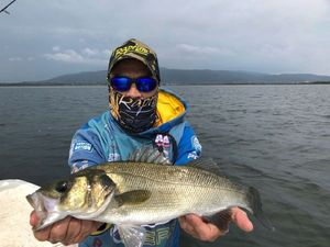 Black Sea Bass — Marco Iseppi