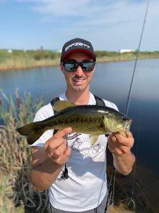 Largemouth Bass — Mathias Guillard