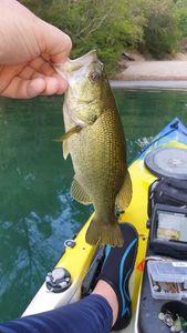 Largemouth Bass — Les Bredouilleurs