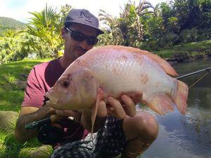 Tilapia — Guillaume Martinez moniteur guide de pêche