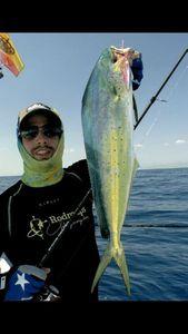 Pompano Dolphinfish — Nicolas Xmylife Rodmaps