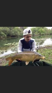 Common Carp — Mathis Jourdan
