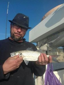 Spotted Seabass — Yvan Castera