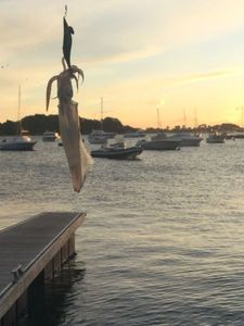 European Squid — Aurele Lesouef