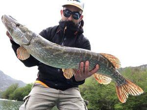 Northern Pike — Martial Gisbert