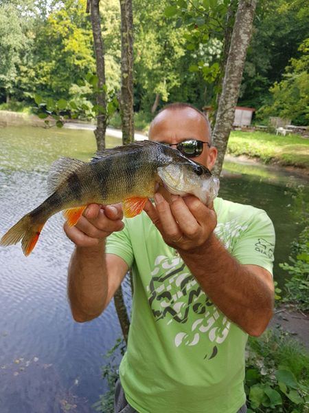 European Perch by Monster Carna | 1
