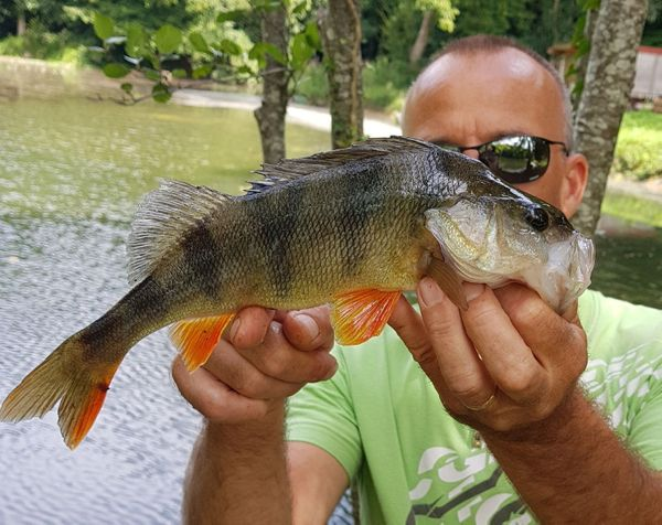 European Perch by Monster Carna | 0