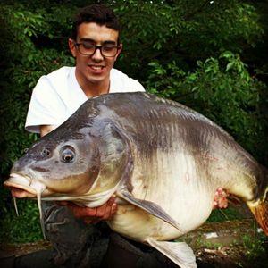 Common Carp — Nicolas Leveque