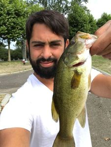 Largemouth Bass — Ruben Scheit