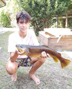 Brown Trout — Corto Oliva