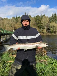 Atlantic Salmon (Landlocked) — Talon Jambon