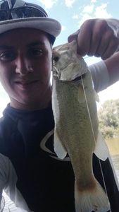 Largemouth Bass — Tony Carpefishing