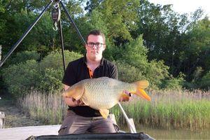 Common Carp — Pierre Rebeche