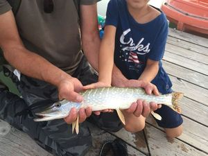 Northern Pike — Fish & Fils