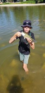 Smallmouth Bass — sylblue Fishing