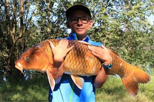 Koï Fish — Andreas Libre