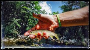 Brown Trout — Tony Fish