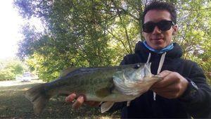 Largemouth Bass — Adrien Sarazin