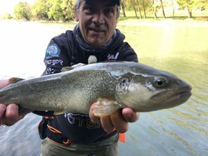 Marble Trout — Marco Iseppi