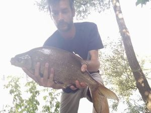 Common Bream — Joseph Gonnord