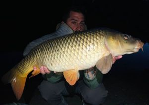 Common Carp — Stephane Blanchon
