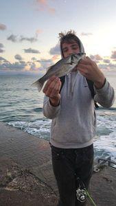 European Bass — Loic Chapelain