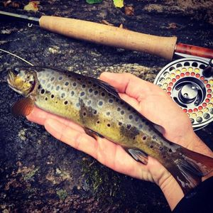 Brown Trout — Guillaume Reilem