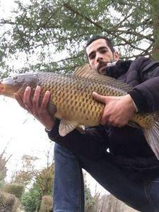 Common Carp — Bruno Andre