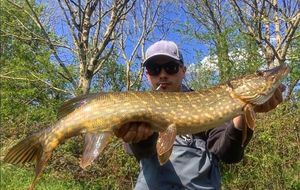 Northern Pike — Corentin Colnot