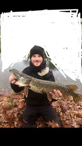 Northern Pike — Corentin Roncière