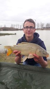 Common Carp — multifishing