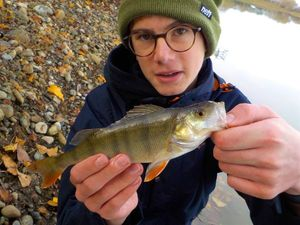 European Perch — Nnay Nnay
