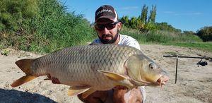 Common Carp — Nico De Sousa