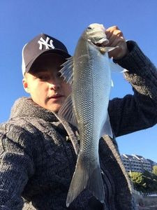 European Bass — Romain Ceolin
