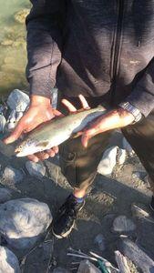 Rainbow Trout — Jerem G