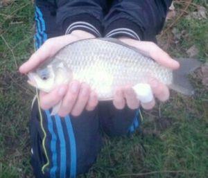 Crucian Carp — DadAndSon Fishing
