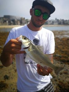 European Bass — Guillaume Nuget