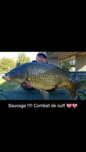 Common Carp — Christophe drincqbier