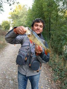 European Perch — Manu Roux