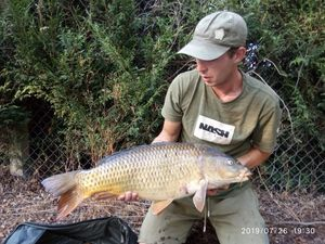 Common Carp — Damien Guarrera