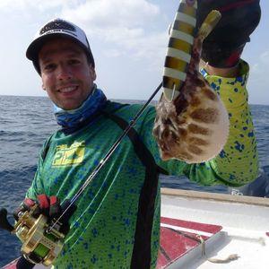 Blunthead Puffer (Balloonfish) — Nicolas Xmylife