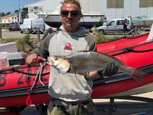 Meagre — LoupBar Fishing