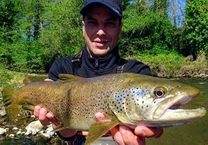 Brown Trout — Christof ventura