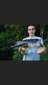 Largemouth Bass — Hugo Lanusse