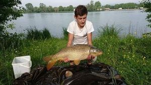 Common Carp — Alexis Signoret