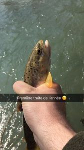 Brown Trout — Latute David